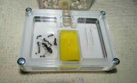 Формикарий(дом для муравьёв
