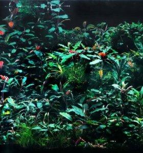 Растения для креветочника