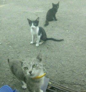 Котята(девочки)
