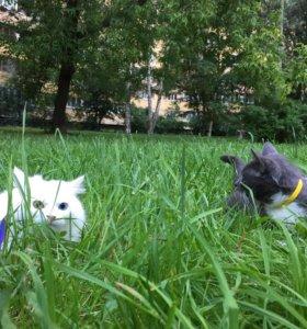 СРОЧНО Кот и кошечка