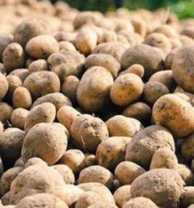 Картофель мелкий на корм животных