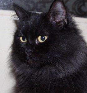 Кошка в добрые руки Марго, кошечка в дар