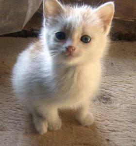 Котенок в добрые руки!!!