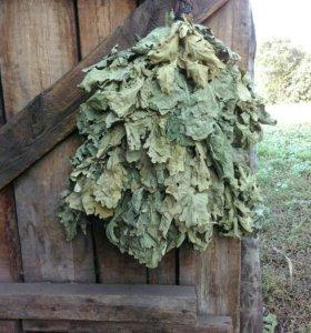Веники дубовые (для бани)