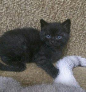 Котенок девочка 1месяц10дней