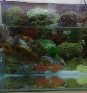 Черепаха красноухая + аквариум + фильтр
