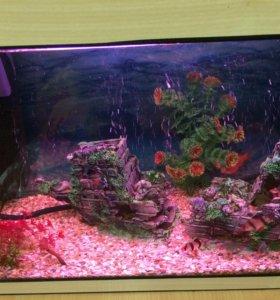 Аквариум 70 л с рыбками