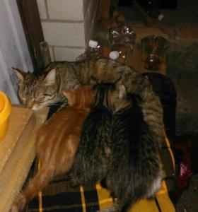 Срочно отдам симпатичных котят.