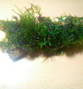 Рождественский мох на коряге с присоской