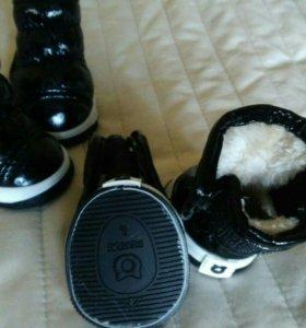 Ботинки для собачки
