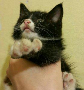 Котенок девочка махонькая