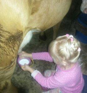 Меняю корову на лошадь