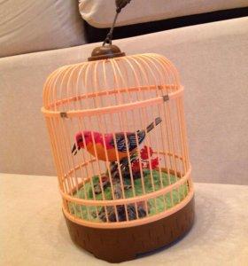Птичка поет_звуки леса