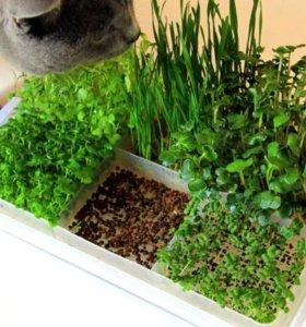Проращиватель для микро зелени