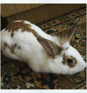 Кролик приглашает на ВЯЗКУ