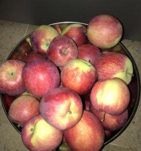 Яблоки с дерева