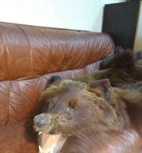 Продается шкура медведя с головой и с когтями