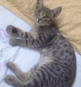 Котик 5 месяцев