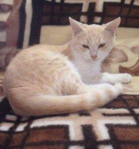 Котик - персик 5 месяцев
