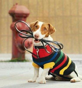 Выгул собак в Красногорске