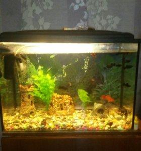 Аквариум с рыбками на 140 л.