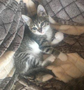 Удивительные котята от кошки крысоловки