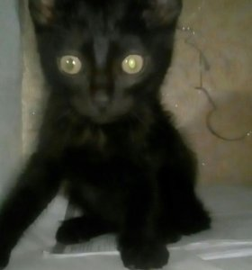 Котенок1,5м