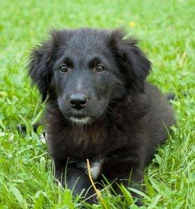 Невероятный щенок Плюша в дар, 2 месяца