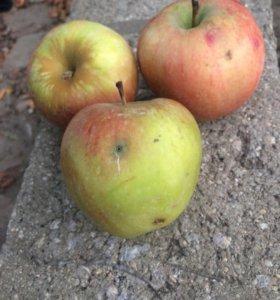 Продаю яблоки на Компот(падалка )