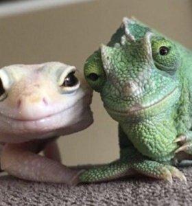 Террариум для ящериц и гекконов.