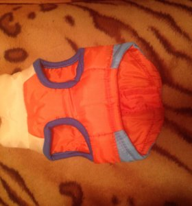 Одежда для собаки (йорка)