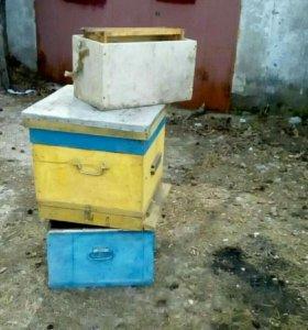 Корпуса для пчел