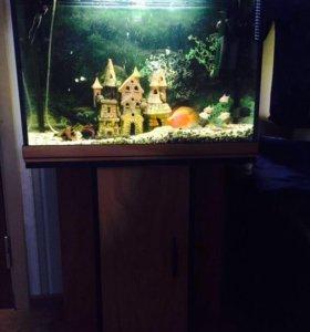 Рыбки с аквариум и пренадлежнастями