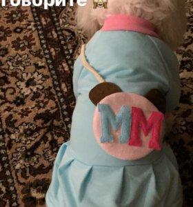 Платьице для собаки