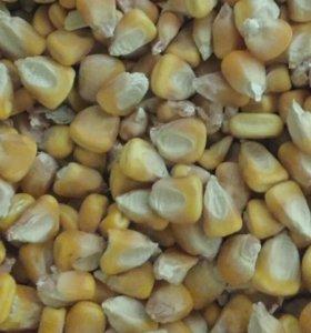 Кукуруза урожай 2017