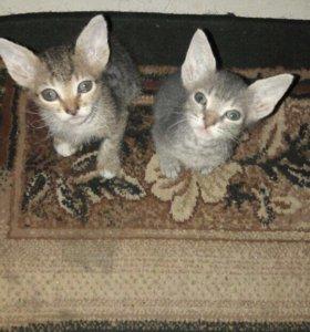 Милые котейки