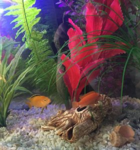 Панорамный угловой аквариум