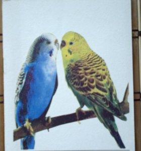 Книжка по содержанию попугаев