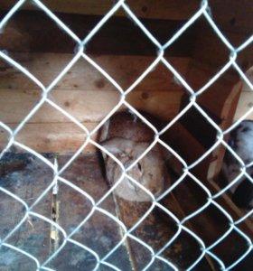 Кролики и+ клетка