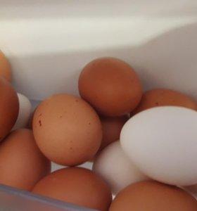 Яица куриные домашние