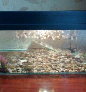 Черепашки декоративные с аквариумом