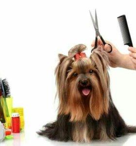 Груминг (стрижка) собак