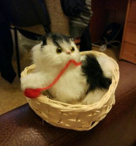 Кот в корзинке.