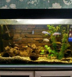 Продается аквариум 150 л