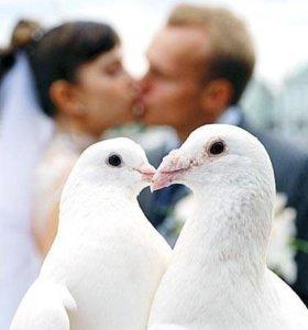Голуби на торжества и свадьбы