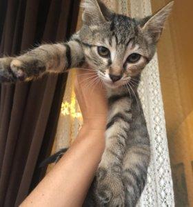 Котята Петерболда