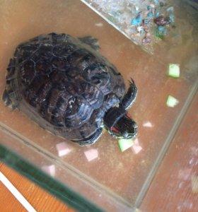 Черепаха с аквариумом 300₽