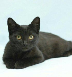 Чёрный Котёнок, девочка, 4 мес