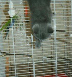 Большая клетка для птиц или др животных