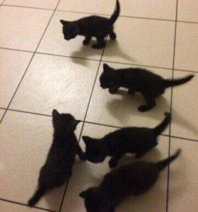 Котятки СРОЧНО ИЩУТ ДОМ